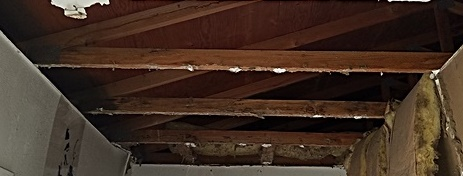 Termite Tube damage